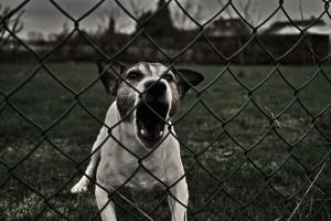 dog-eat-dog-22-1271302-m.jpg