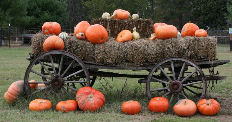 pumpkin-wagon-1361404.jpg