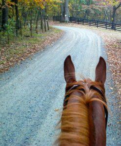 Horse in road
